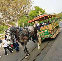 23 Facts You Didn't Know About Disneyland Transportation