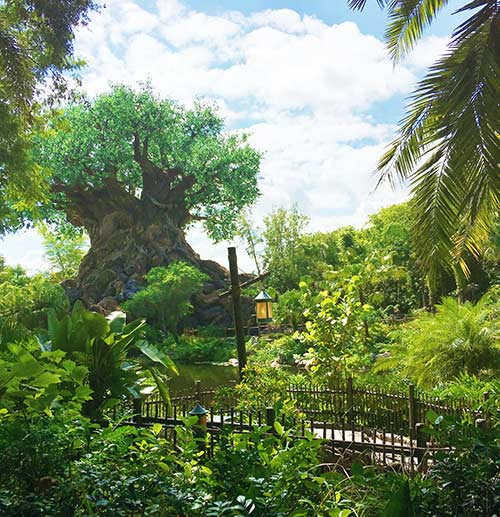 Animal Kingdom Walt Disney World 2017