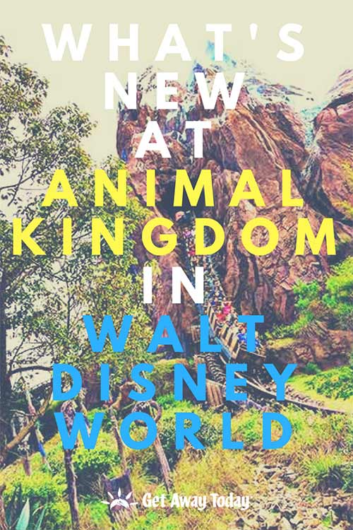 What's New at Animal Kingdom in Walt Disney World
