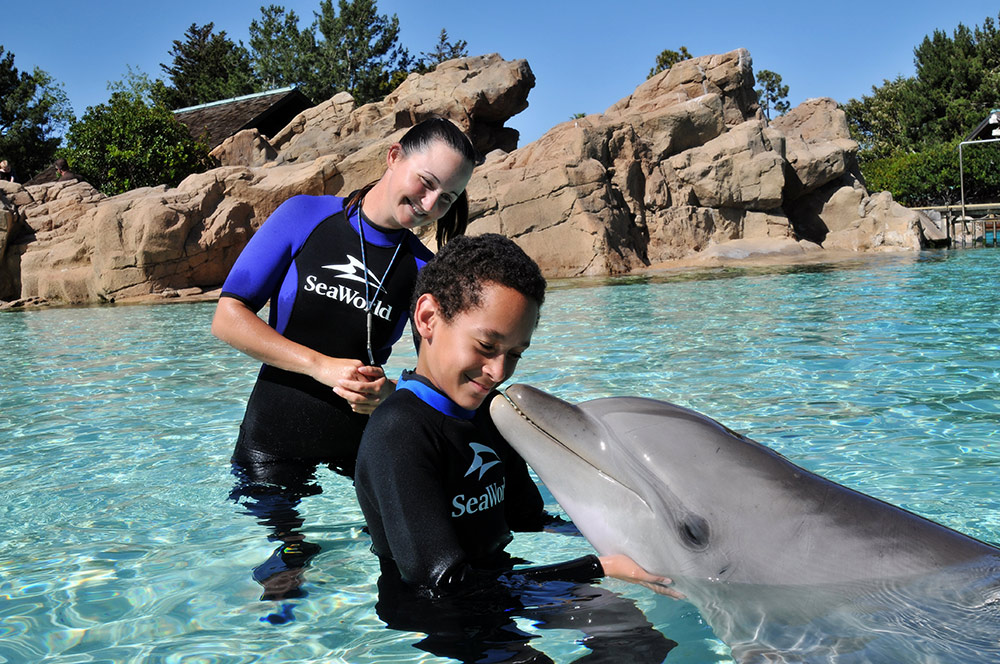 Kids Free October - SeaWorld Dolphin Interaction