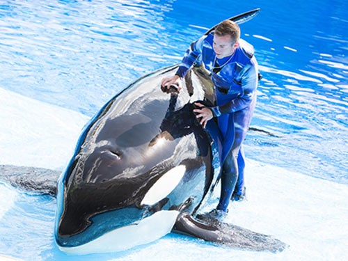 Orca Experiences at SeaWorld San Diego All Day Orca Play