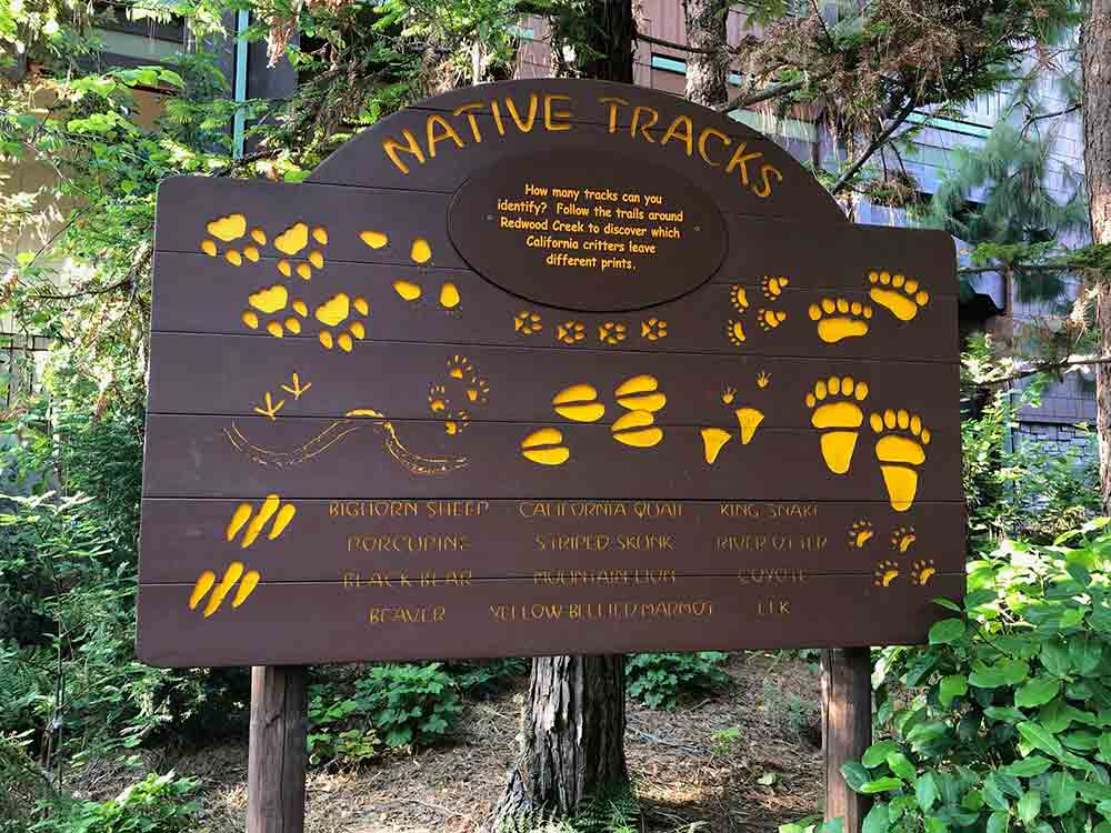 Redwood Creek Challenge Trail Native Tracks