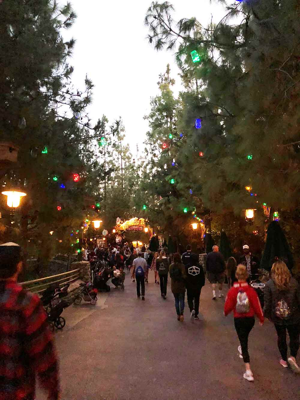 Redwood Creek Challenge Trail Tree Lights