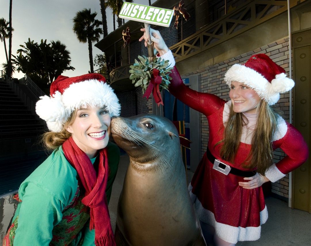 What's New at SeaWorld in 2017 - Christmas Celebration