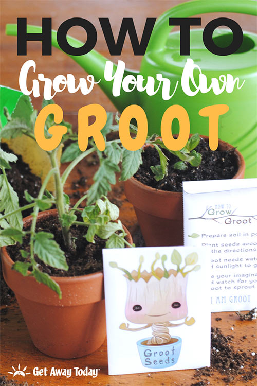 How To Grow Your Own Baby Groot from Guardians of the Galaxy || Get Away Today